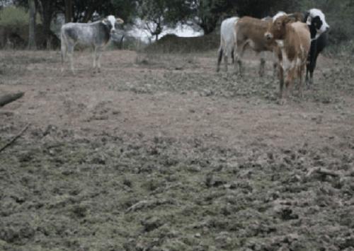 Sequía pone en riesgo producción en Macharetí